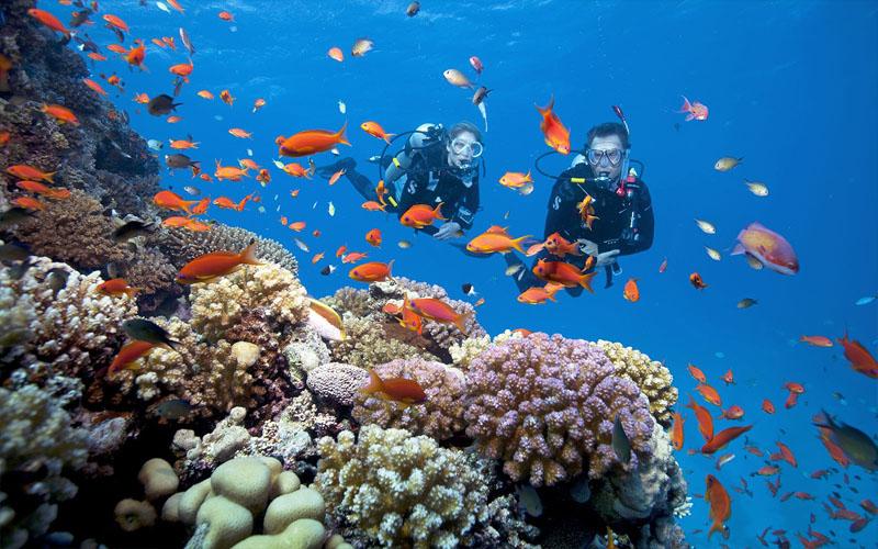 Ngắm san hô đảo Côn Sơn