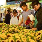 Tổng hợp kinh nghiệm mua hoa chợ Hồ Thị Kỷ đầy đủ nhất 2021